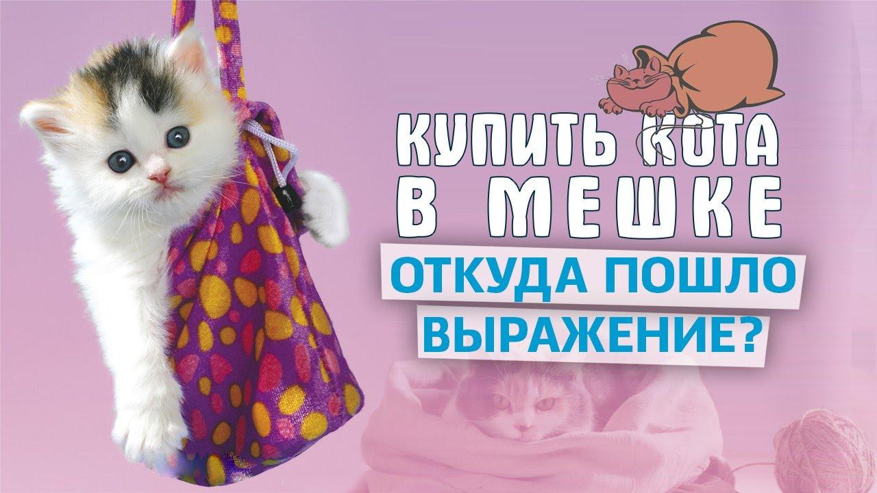 -значит-выражение-Купить-кота-в-мешке